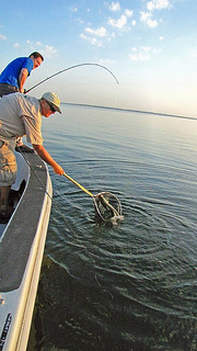 lake_texoma_fishing_reports_texoma-striper-fishing-sunrise